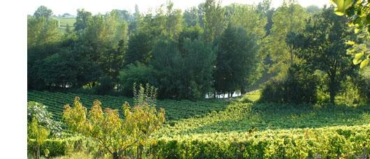 Château Belles-Graves, Grands Vins de l'appellation Lalande-de-Pomerol